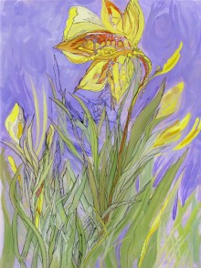 Struggle of the Daffodil